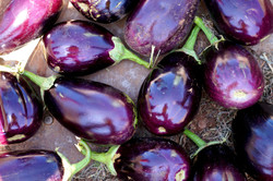 Eggplant harvest