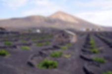 La route des vins à Lanzarote