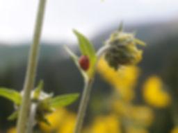 Crested-Butte-(47).jpg