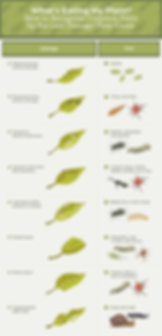 recognize-common-pests-by-leaf-damage-00