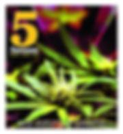 5enses cover 19-08.jpg