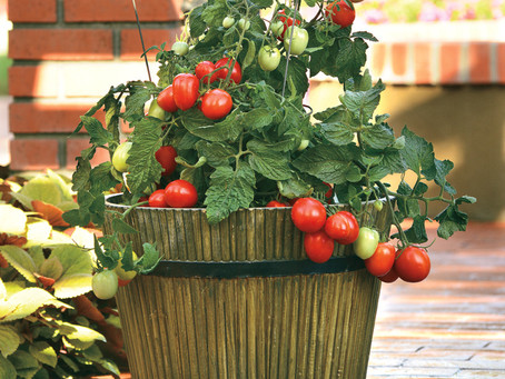 Container Gardening, Part 1
