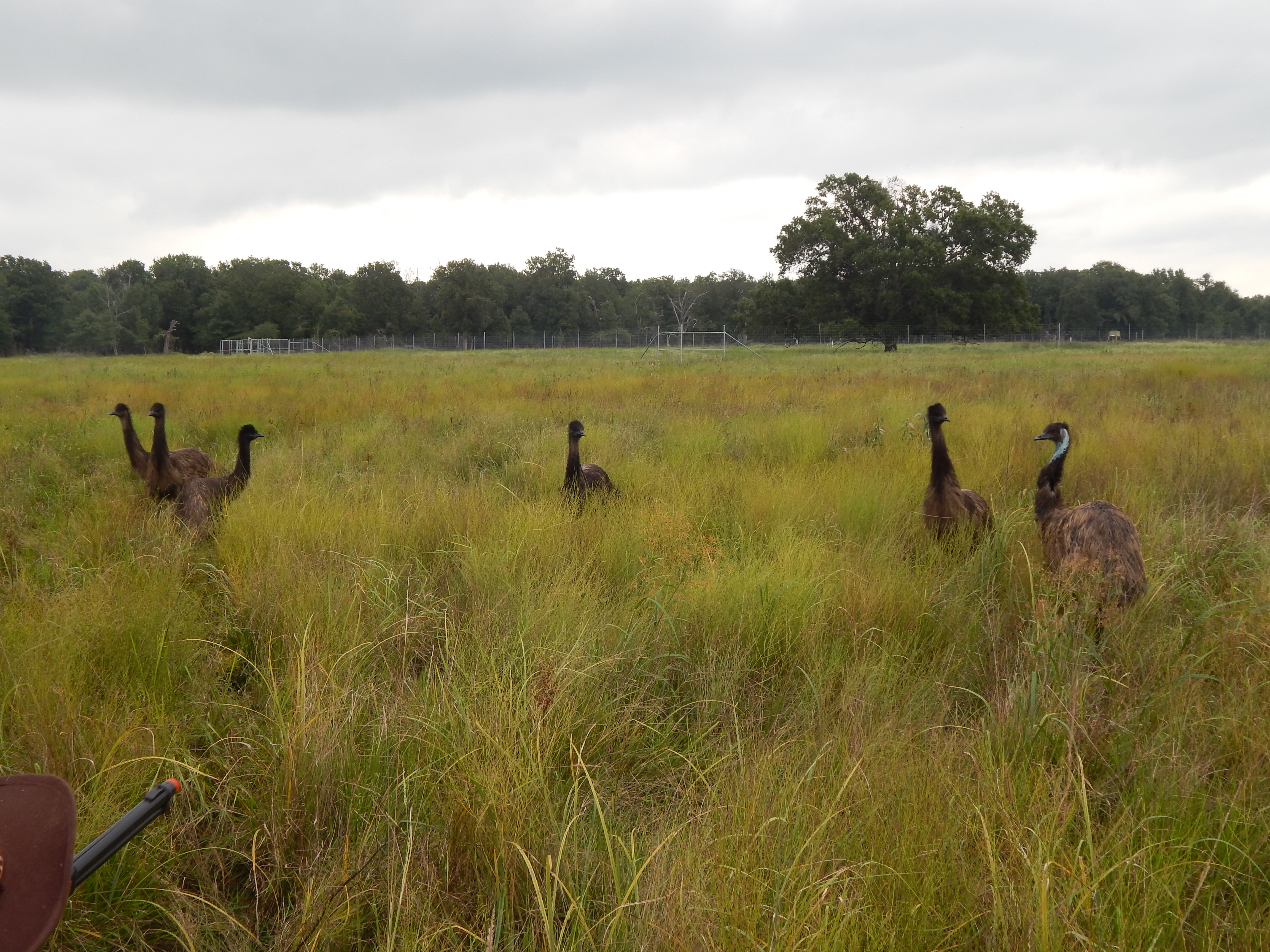 Emu's