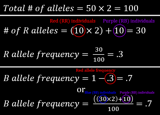 Allele frequency calculations: R = .3, B = .7