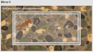 Sample results from the Macroinvertebrate simulation
