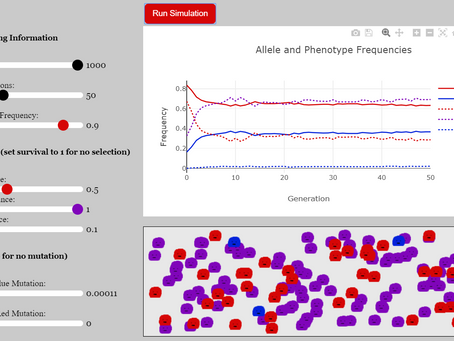 Population Genetics Simulation