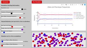 Sample run of a population genetics simulation used for a virtual heterozygote advantage lab.