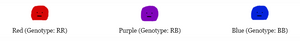 Fictional species color phenotypes with corresponding genotypes