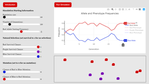 A trial run of a population genetics simulation showing the ending frequencies for two alleles.