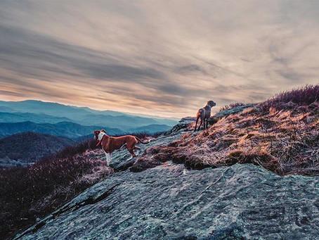 Van Life takes Blue ridge mountains