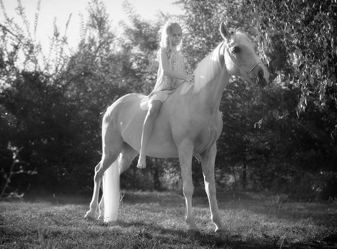 Черно-белое фото с лошадьми