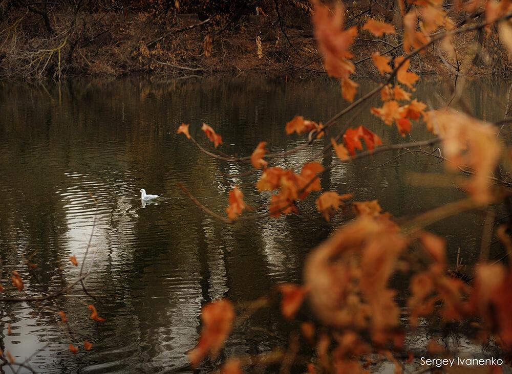 photo-landscape-45.jpg