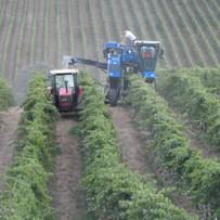 machine harvest