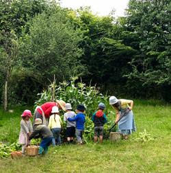 Landcare in May Tree Kindergarten