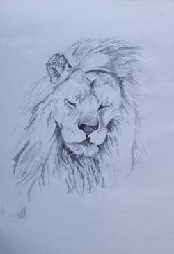 'Study of a Lion' - 2008