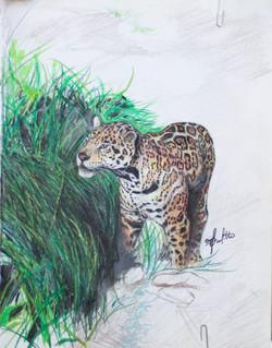 'Cougar' - 2008