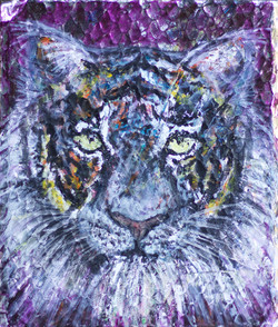 'Study of a Tiger' - 2017