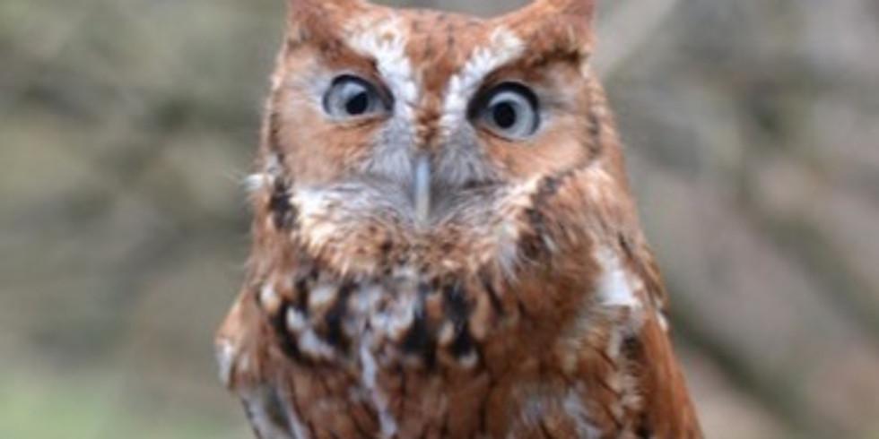 Owls of Ijams: A virtual naturalist chat