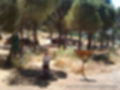 Campamento naturaleza y aventura Madrid