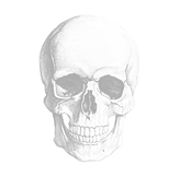 faded skull new.png
