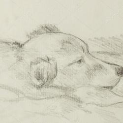 Une vie de chien