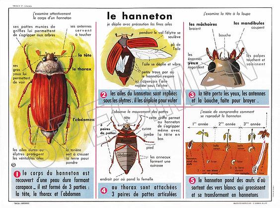 LE HANNETON