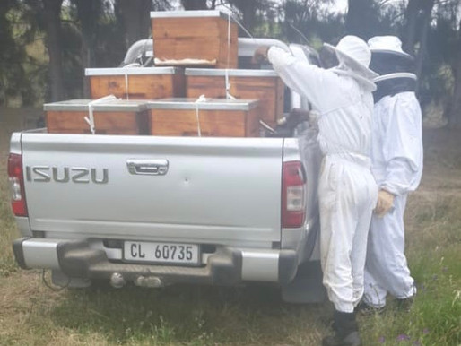 Loyiso Hives, helping to keep the Western Cape buzzing