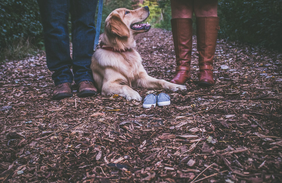 blur-canine-close-up-412537.jpg