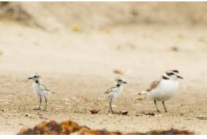 An Overview of Wildlife in Isla Vista