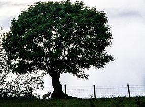 Tree3.jpg