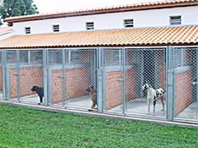 Justiça obriga município a providenciar canil para tratar de cães e gatos abandonados
