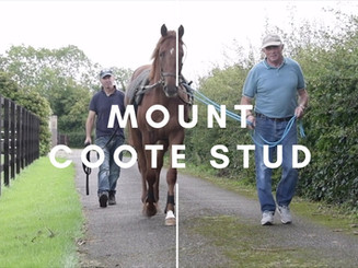 MOUNT COOTE STUD