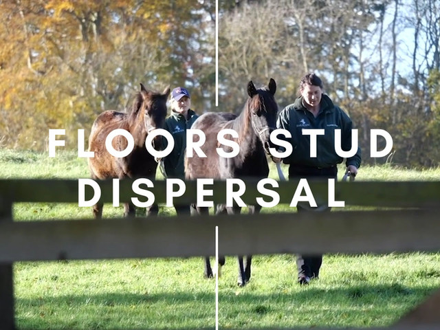 FLOORS STUD DISPERSAL