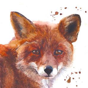 Noon Day Fox