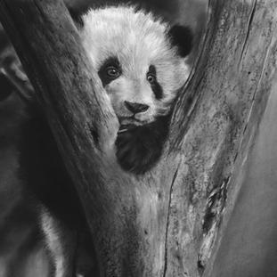 Panda Blues.jpeg