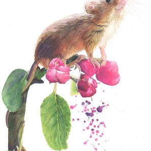 Arley Mouse