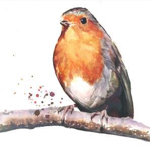 Barbara's Robin