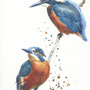 Kingfisher Duet