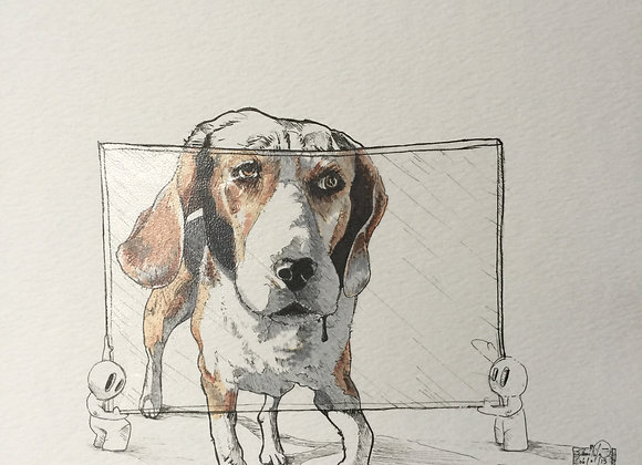 Dog and screen