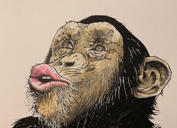 Chimpanzee pout