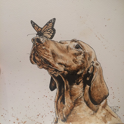 Coffee hound and butterfly