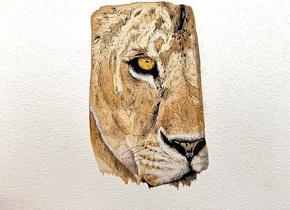 29.The Liones eye