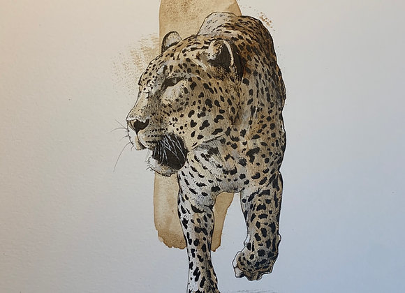Leopard  spots coffee