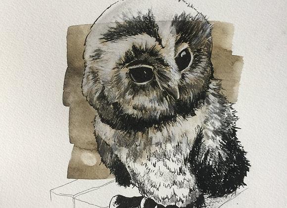 Owl looks