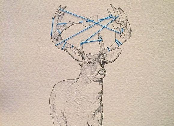 Deer caught blue