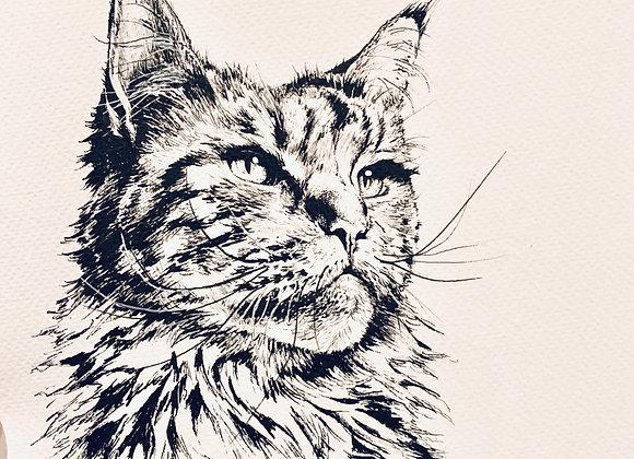 Kitty Cat Stare