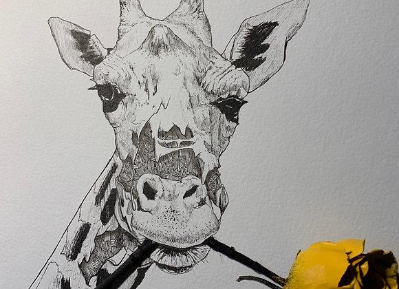 Giraffe melt and rose