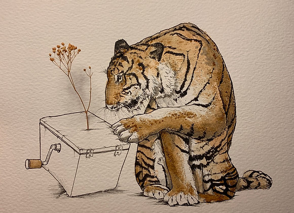 Tiger with Box flower