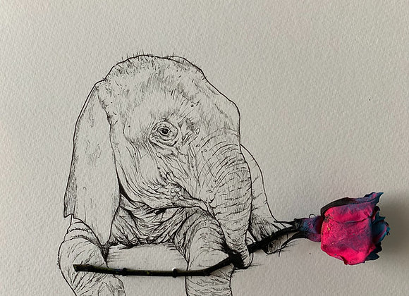 Baby Elephant and rose