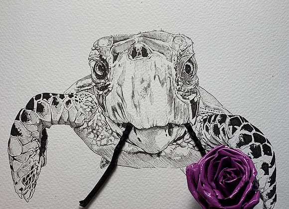 Turtle and Purple Rose